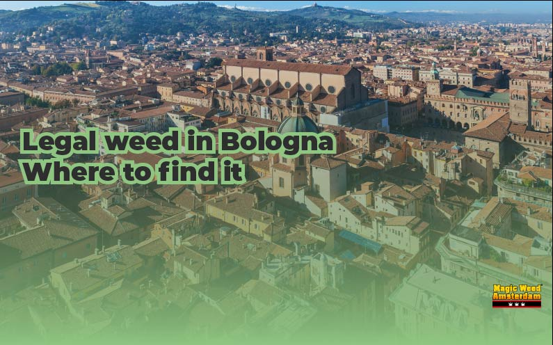 LEGAL WEED IN BOLOGNA