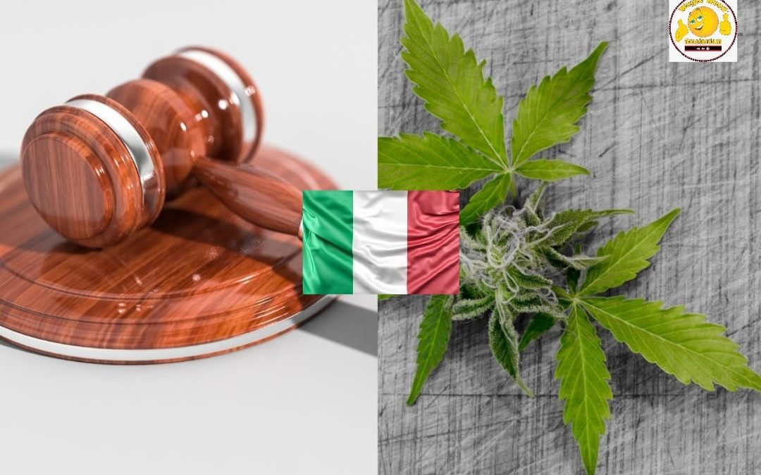 cbd legalisation in italy magic weed